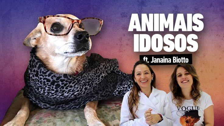 COMO CUIDAR DE ANIMAIS IDOSOS
