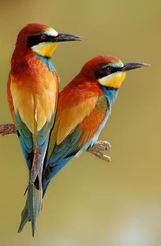 Pretty Birds ~ Species Unknown...God, Art, Mothers Nature, Colors Palettes, Colors Schemes, Beautiful Birds, Colors Birds, Feathers, Bees Eaters