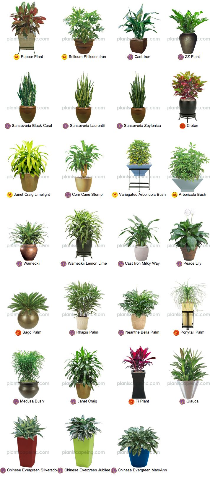 Small Tropical Plants for Interior Landscaping by Plantscape Inc.