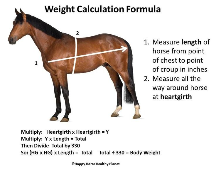 Horse Weight Calculation Formula & 5 Common Mistakes People Make When Feeding - Equine Diet Food Health Care Grain Hay