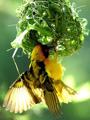 Bird Watching in Uganda, Africa.www.instinctsafaris.com