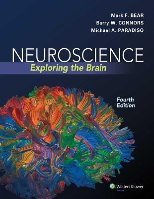 """Neuroscience : exploring the brain : 4th ed."" / Mark F. Bear, Barry W. Connors, Michael A. Paradiso. Philadelphia : Wolters Kluwer, cop. 2016. Matèries : Neurociències; Neurofisiologia; Neurobiologia; Sistema nerviós. #nabibbell"