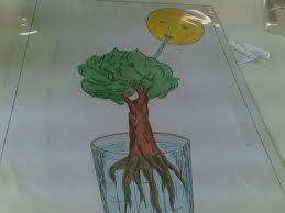 """Chart 8 """"The Drink of the Sun"""" - leaves release water, more water is released in the presence of the sun"""
