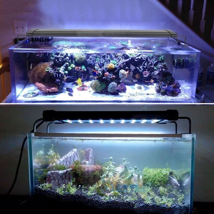The reason why you should have an aquarium light fixture is that the lighting provides vital energy to plants and animals and is essential for an aquarium containing photosynthetic organisms such as plants or anemones. Find the list of the Top 3 Aquarium Lights at Animals Small and Big.