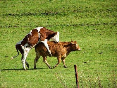 """La Rete delle Reti: Franco Berrino: """"Tutti i danni del latte animale....."""
