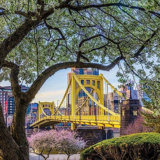 Spring on the North Shore of #pittsburgh looked beautiful this morning, as colorful blossoms framed the Clemente Bridge at dawn