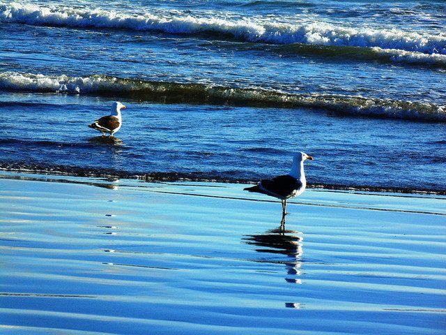 Freedom | Flickr - Photo Sharing!