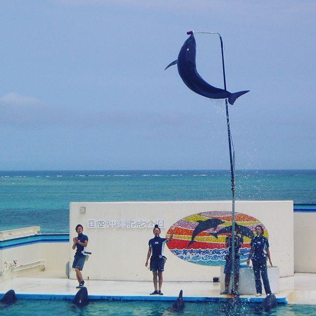【oz.m.n.y】さんのInstagramをピンしています。 《「ジャンプ!!」 #japan#일본#Japón#Япония #旅行#trip#travel#여행#viajes#путешествие#海#sea#Ocean#바다#mar#море#イルカ#Dolphin#돌고래#delfín#дельфин #水族館#Aquarium #沖縄#okinawa#오키나와#Окинава#수족관#acuario#аквариум》