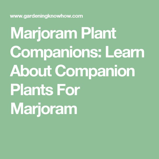Marjoram Plant Companions: Learn About Companion Plants For Marjoram