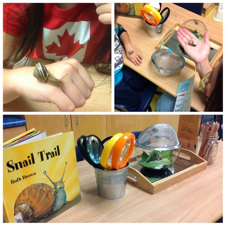 Snail Inquiry