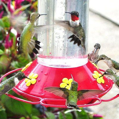 How to Make Hummingbird Nectar - 4 Easy Steps to Make Hummingbird Nectar