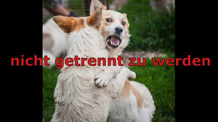 Animals new life e.V. Boris & Iris suchen ein Zuhause (Nur zusammen abzugeben) Zuhause gesucht aus #Tierschutz #tiervermittlung #adoption