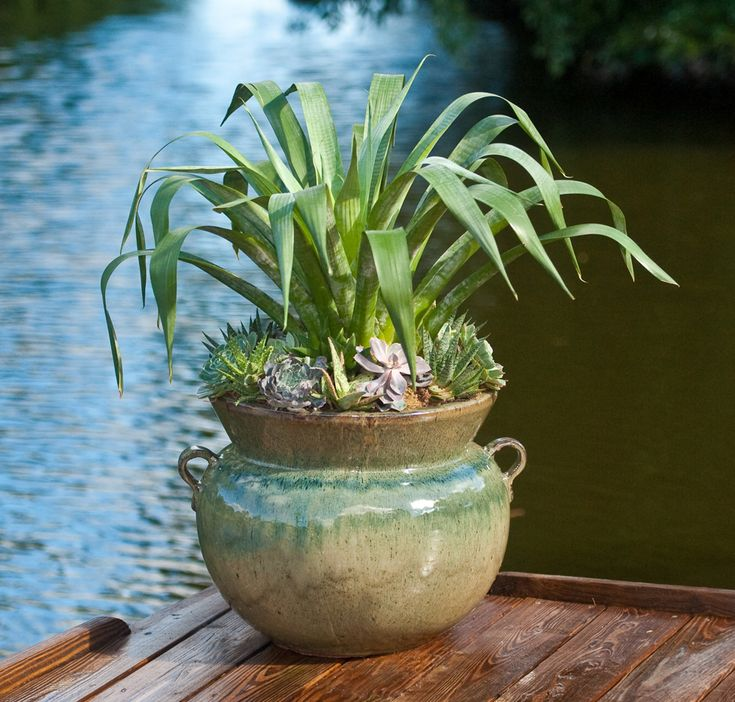 South Florida Tropical Landscape Ideas Planter Container: 63 Best Images About South Florida Container Gardens On