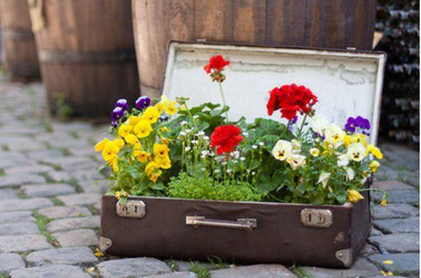 Из ненужной и давно не востребованной вещи можно сделать оригинальный вазон. Кстати,внутреннюю поверхность крышки можно тоже как-то интересно оформить.А наружную поверхность чемодана защитить от дождя с помощью водонепроницаемой краски.