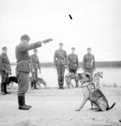 Soldiers training dogs.Continuation War