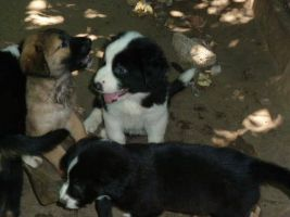 Puppies by AnimalWelfare