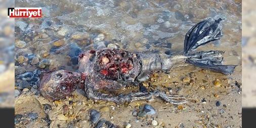 Sosyal medyayı sallayan denizkızı görüntüleri : İngiliz bir adam tarafından sosyal medyada paylaşılan yaratığın görüntüleri çok konuşuldu.  http://ift.tt/2dS7Nwn #Dünya   #görüntüleri #paylaşılan #medyada #yaratığın #konuşuldu
