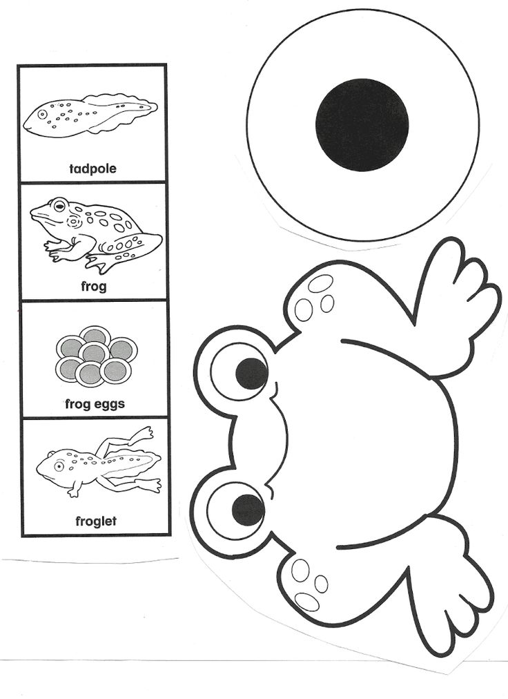 24 best Animal Life cycle worksheets images on Pinterest