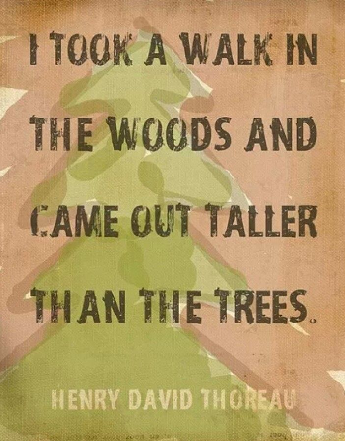 Walk In The Woods Quotes