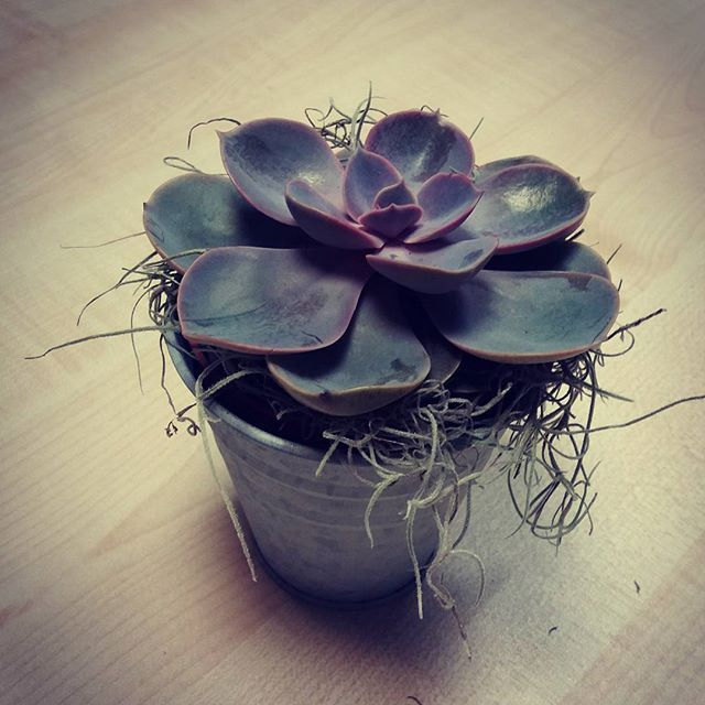 Succulents are beautiful. I love them <3  #sukulent #succulents