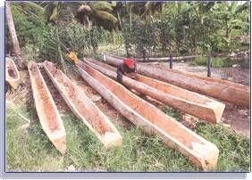 Tree trunk canoe