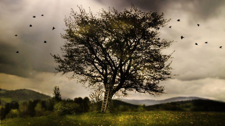 Magic tree by Simon Pytel on 500px