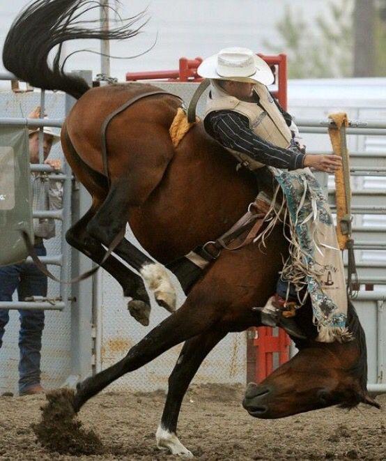 Saddle Bronc, gotta love this pic!