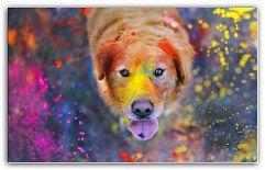 Питание взрослых собак Собака – это то, чем она питается. Это утверждение так же верно, как и всем известная фраза Гиппократа, правда, относительно человека. Ещё до того, как хозяин занесёт в первый раз в квартиру щенка, он должен тщательно продумать и подготовиться к тому, как он будет кормить своего новоиспечённого ... http://c.cpl1.ru/7kNM