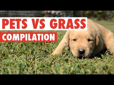 Pets Vs Grass Funny Pets Compilation 2016 : Video Clips From The Coolest One