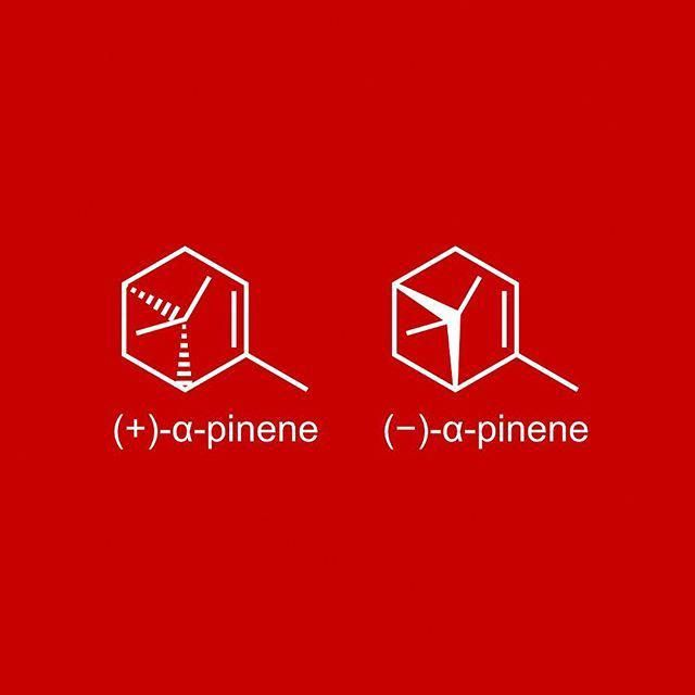 The last #molecule of #christmas! The pine tree smell  The