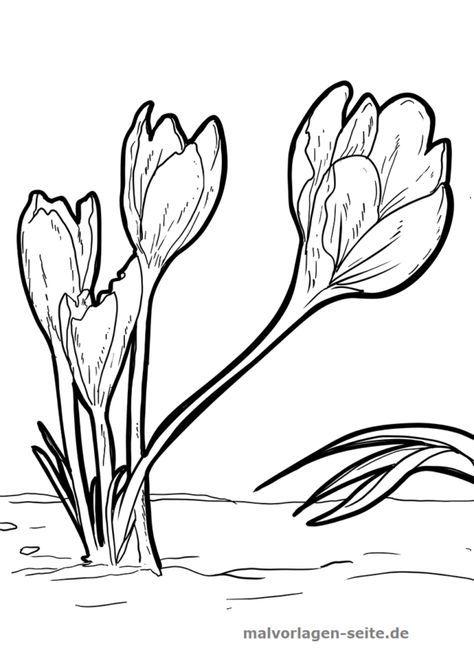Malvorlage Krokusse Umwelt Für Kindergartenkinder Pinterest