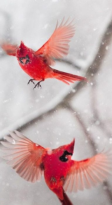 winter…. Snow Birds