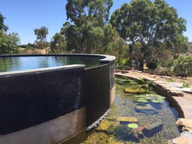 1097 best natural pools images on pinterest natural pools natural swimming pools and natural for Natural swimming pool australia