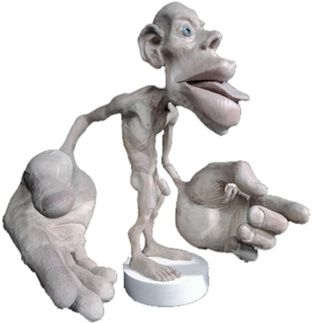 The cortical homunculus represents the importance of various parts of your body as seen by your brain.