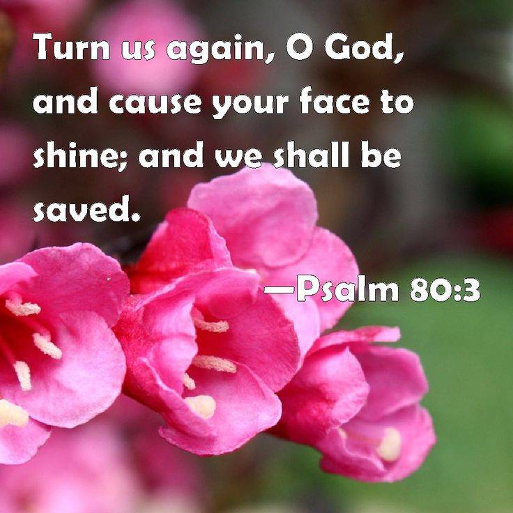 """✝✡Psalm 80:3 KJV✡✝ #Shalom ( Peace ) Everyone!! ( http://kristiann1.com/2015/07/07/ps803/ ) """"Turn us again, O God, and cause thy face to shine; and we shall be saved."""" Our GOD'S NAME is HOLY / RIGHTEOUS / WORTHY / PEACEFUL / LOVING and He is HaShem -Yahweh – YHWH – Elohim – Hosanna – Jehovah – Emmanuel – El Shaddai – Elijah, and HE LOVES us through HIS SON Yeshua – Jesus Christ who is KING of kings, LORD ( ADONAI ) of lords, HE is the ALPHA and OMEGA, the FIRST and the LAST, HE is the…"""