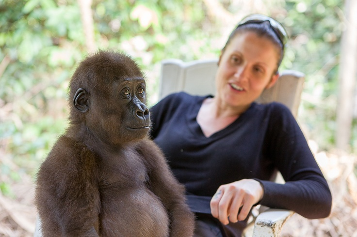 Chickaboo is a young gorilla, orphaned by the illegal bushmeat trade in Cameroon. She is recovering from her ordeal, seen here with our Director Rachel Hogan. © Ian Bickerstaff.   Both were featured in Unreported World's investigation into the bushmeat trade http://www.channel4.com/programmes/unreported-world/4od#3360869
