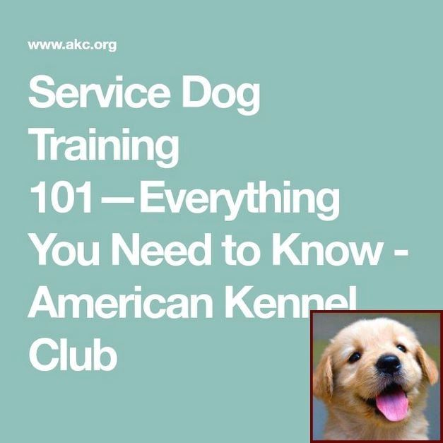 1 Have Dog Behavior Problems Learn About House Training A Bichon Puppy And Dog Training Courses Chicago With Images Dog Training Puppy Training Dog Clicker