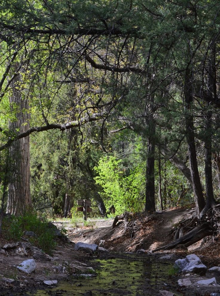 Gila National Forest is the 6th largest National Forest in the US.