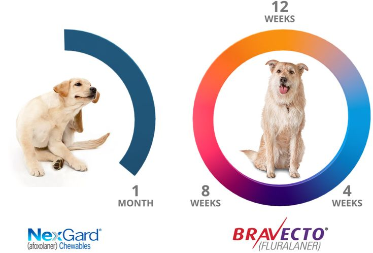 Diagram Of Bravecto Vs The Competition Cat Biting Tick Treatment For Dogs Fleas