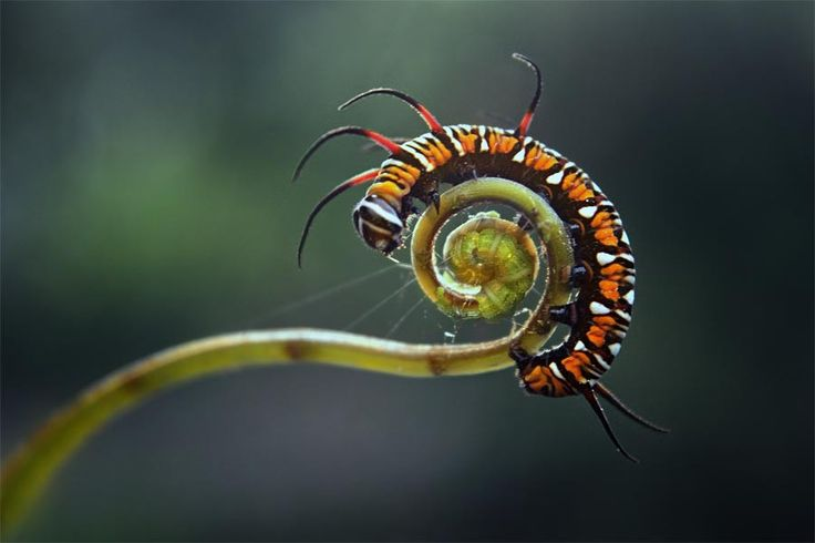 Photograph just spiral... by budi 'ccline' on 500px