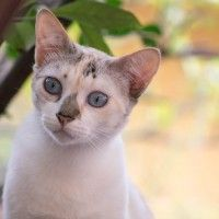 #dogalize Vitiligine nei gatti: i sintomi della malattia genetica #dogs #cats #pets