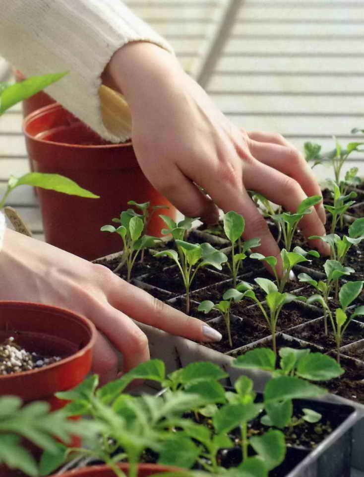Посевные работы в марте, капуста и томат Источник: http://dacha-vprok.ru/posevnye-raboty-v-marte-kapusta-i-tomat