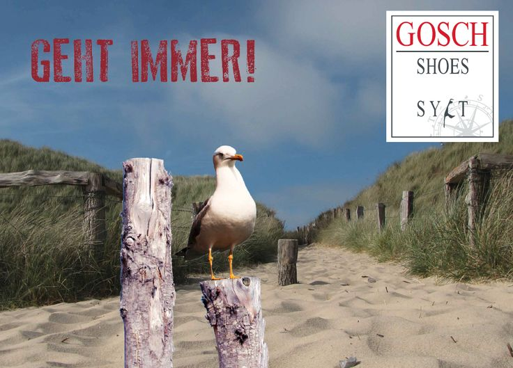 Gosch Shoes Mood Bild #gosch #sylt #möwe #seagulls