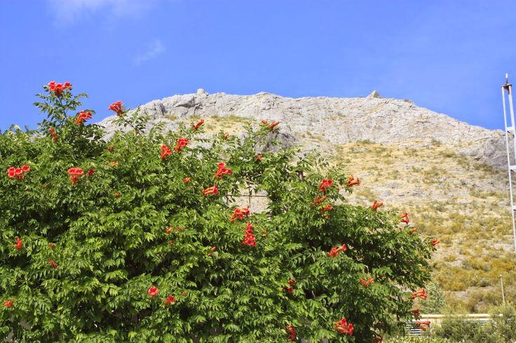 El mundoblog de Miguel Caballero: En el corazón de Martos...un millón de flores