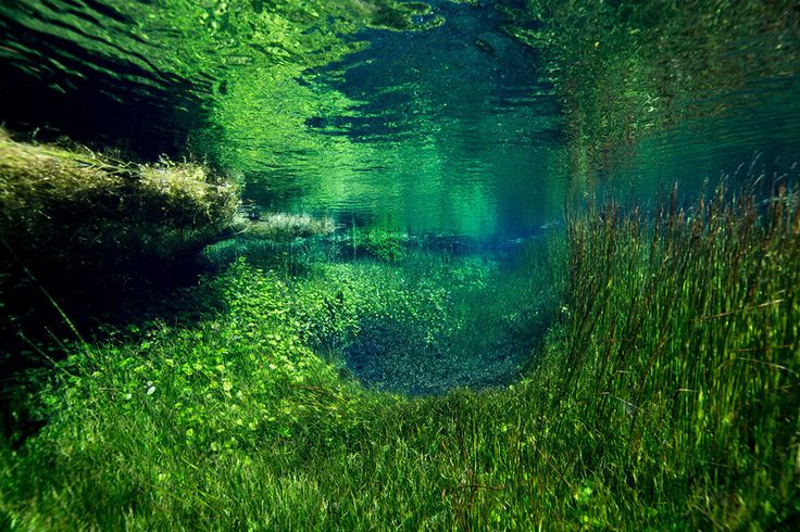 #jem_cresswell #pool #underwater #garden_fills #underwater_garden_fills #fresh_water #water #surreal #surreal_underwater #plant_growth #photographer #photography #nature #wild #noipic