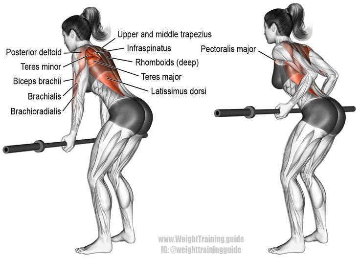 25+ best muscles of the arm ideas on pinterest | arm muscle, Cephalic Vein