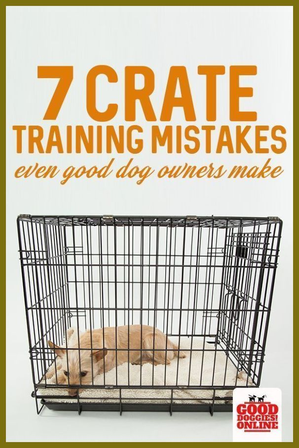 7 Mistakes When Crate Training A Dog That You Should Avoid First Time Puppy Owner Tips Wh Dog Training Obedience Dog Training Easiest Dogs To Train