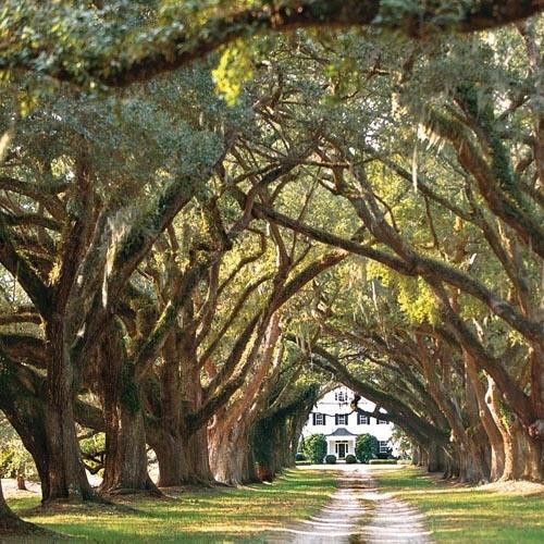 Home Driveway Entrance Ideas: 16 Best Magnolia Lane Images On Pinterest