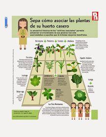 17 mejores im genes sobre huertos en pinterest camas for Asociacion de cultivos tomate