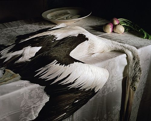 Pelican with turnips by Marian Drew 2004